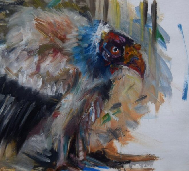 King Vulture, oil on paper