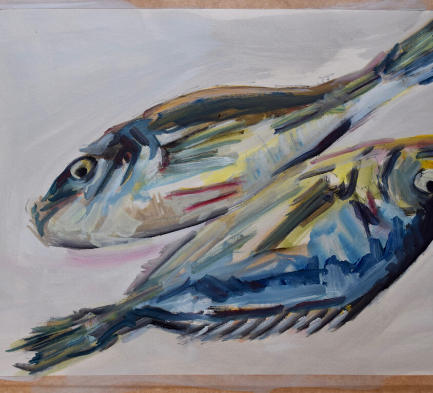 Blue Fish Study