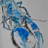 Blue Lobster Study