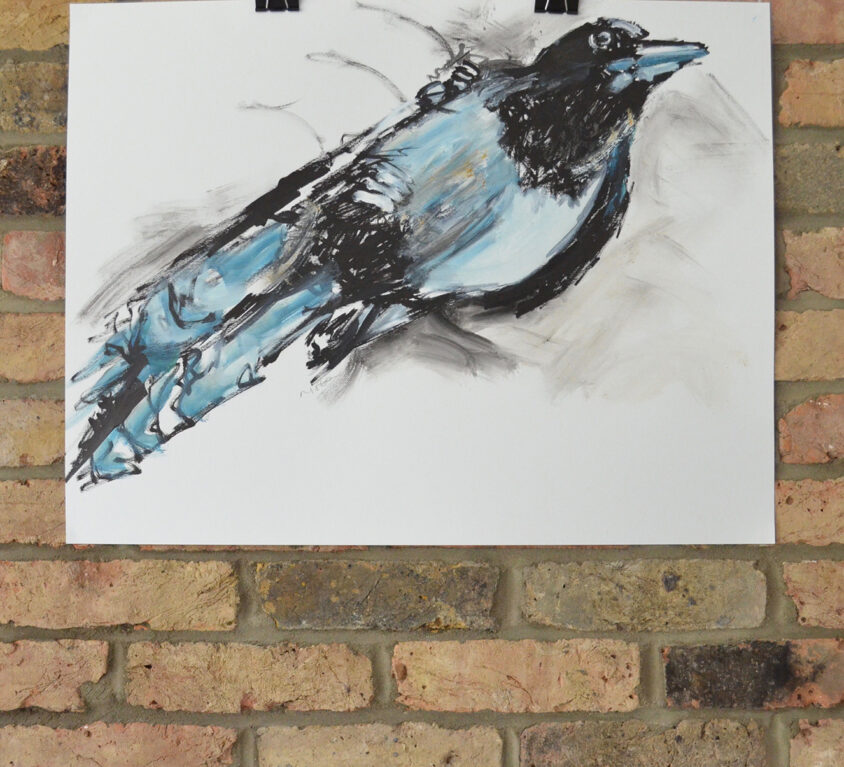 Magpie Two Study