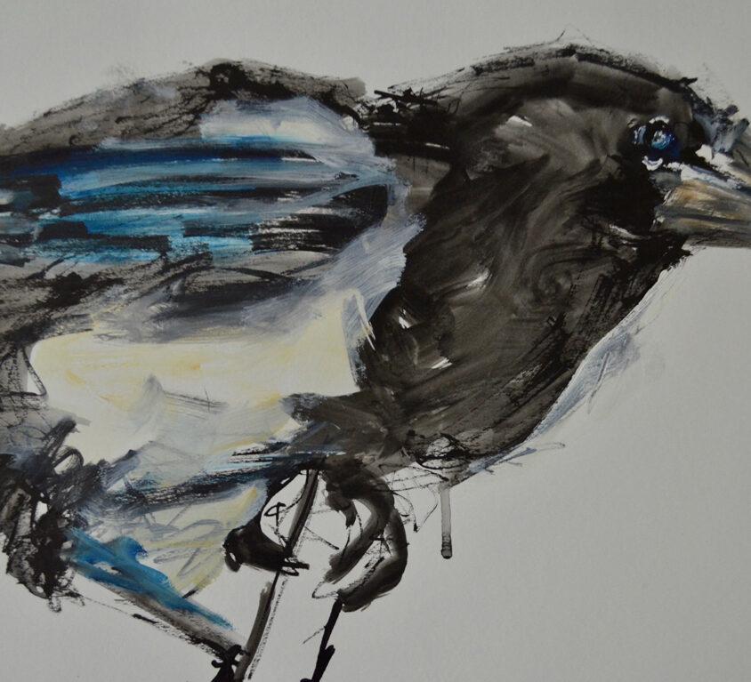 Magpie Study