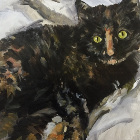 Cat Commission, 50 x 50cm