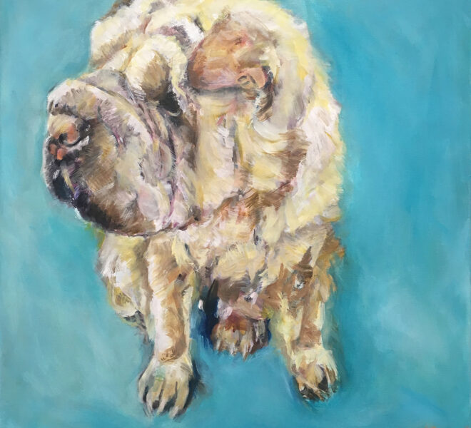 Dog with blue background, 50 x 50cm