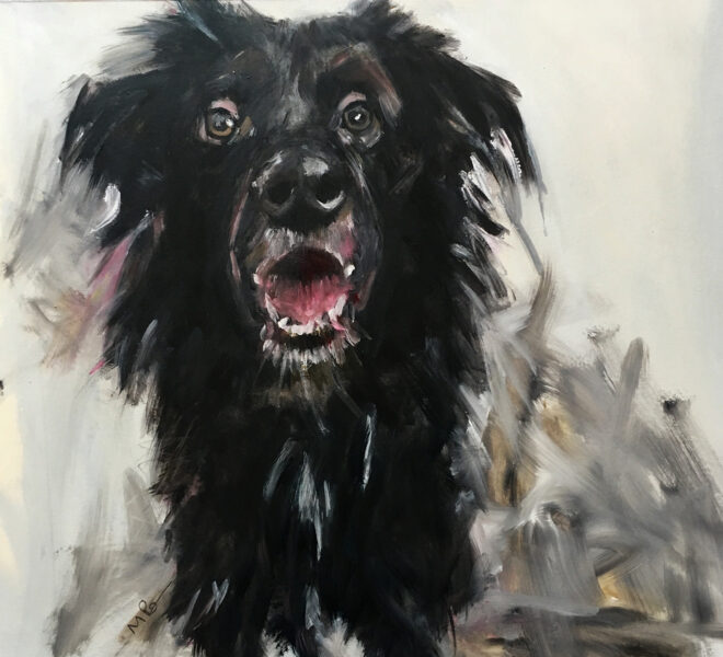 Merry the Dog, 50 x 65cm oil on paper