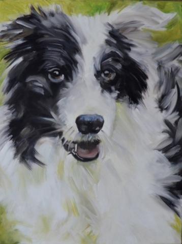 Sheepdog, 60 x 80cm