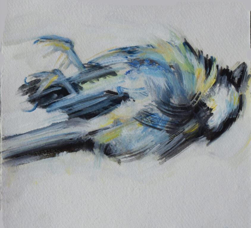 Small Square Bird Study