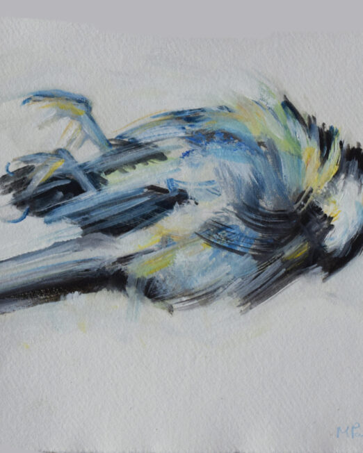 SS Bird Study oil on paper, 20cm x 20cm
