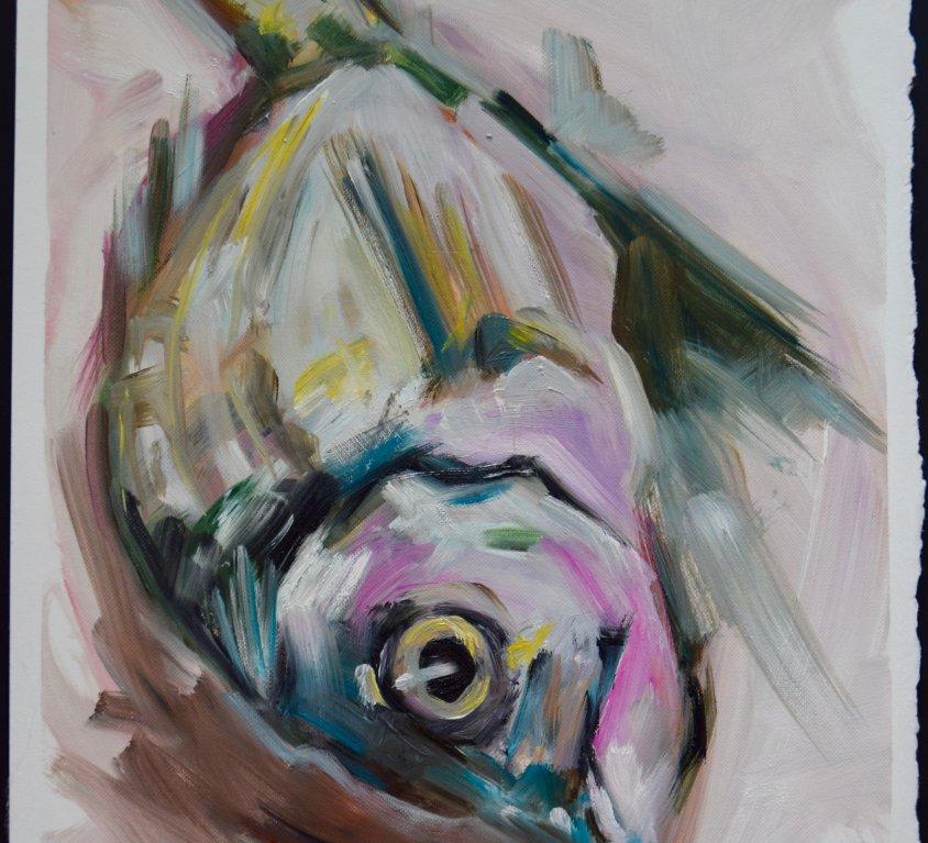 Menorcan Fish Study 3