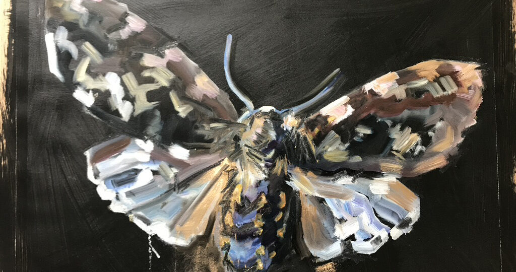 Moth Three 56 x 76cm, oil on paper
