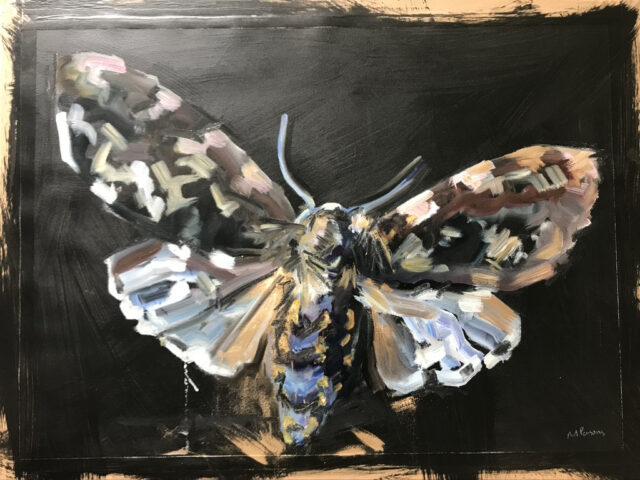 Moth Three 56 x 76cm, oil on paper