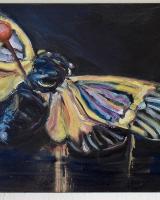 Moth and Pin 50 x 70cm, oil on canvas