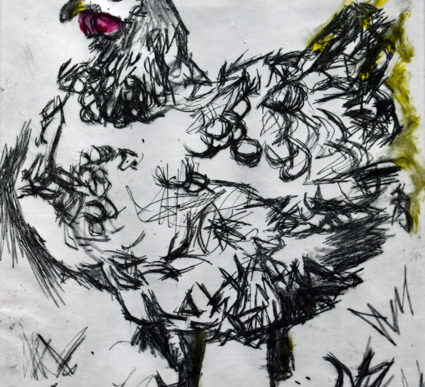 Chicken-Etching, varied edition of 4