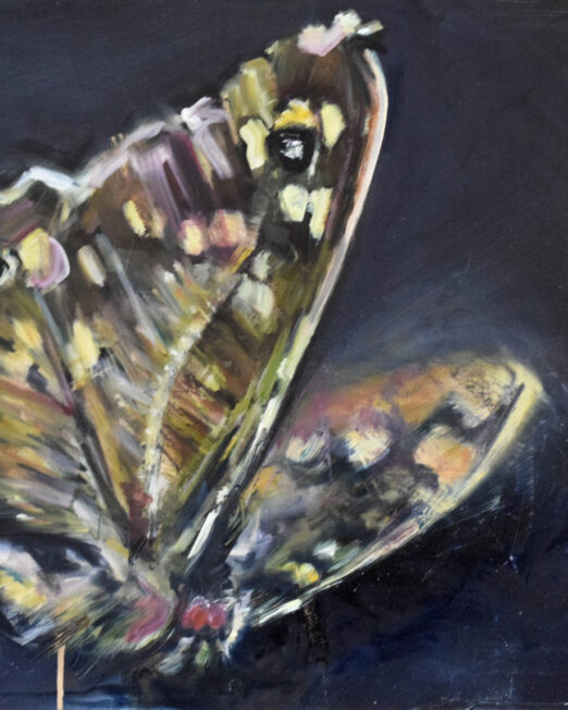 Golden Moth 50 x 70cm, oil on canvas