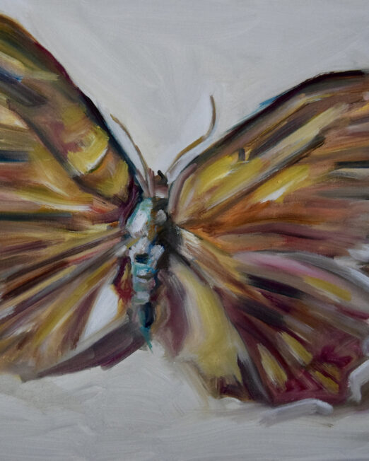 Small Butterfly 40 x 45cm, oil on canvas