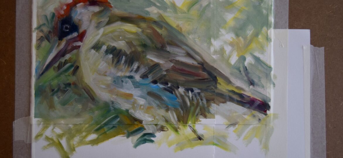 Green Woodpecker study 32 x 42cm, oil on paper