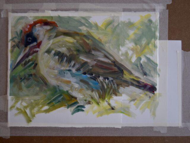 Green Woodpecker study 32 x 42cm, oil on paper