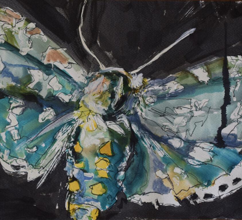 YG Moth