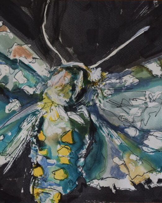 YG Moth 25 x 38cm, watercolour and ink on paper